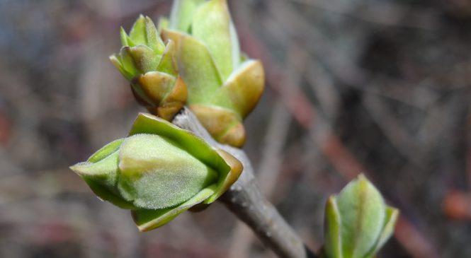Фотофакт: в Запорожскую область посреди зимы пришла весна
