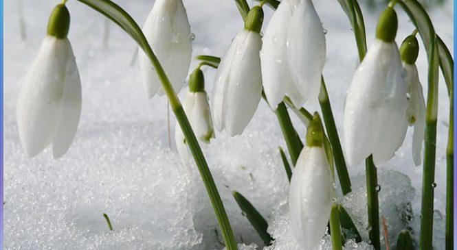 Фотофакт: в Запорожскую область пришла весна
