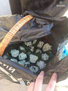 На Металлургов в Запорожье снова продают подснежники (Фото)