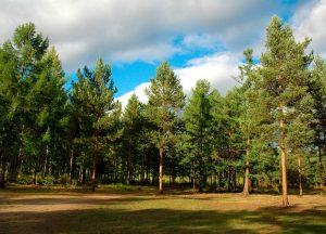 В Запорожской области под жилую застройку отдали лес на берегу Днепра