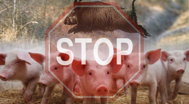 В Госпродпотребслужбе Запорожской области предупреждают об африканской чуме свиней