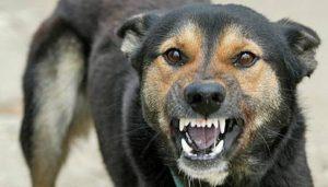 На курорті Запорізької області карантин через сказ: вакцинують домашніх тварин